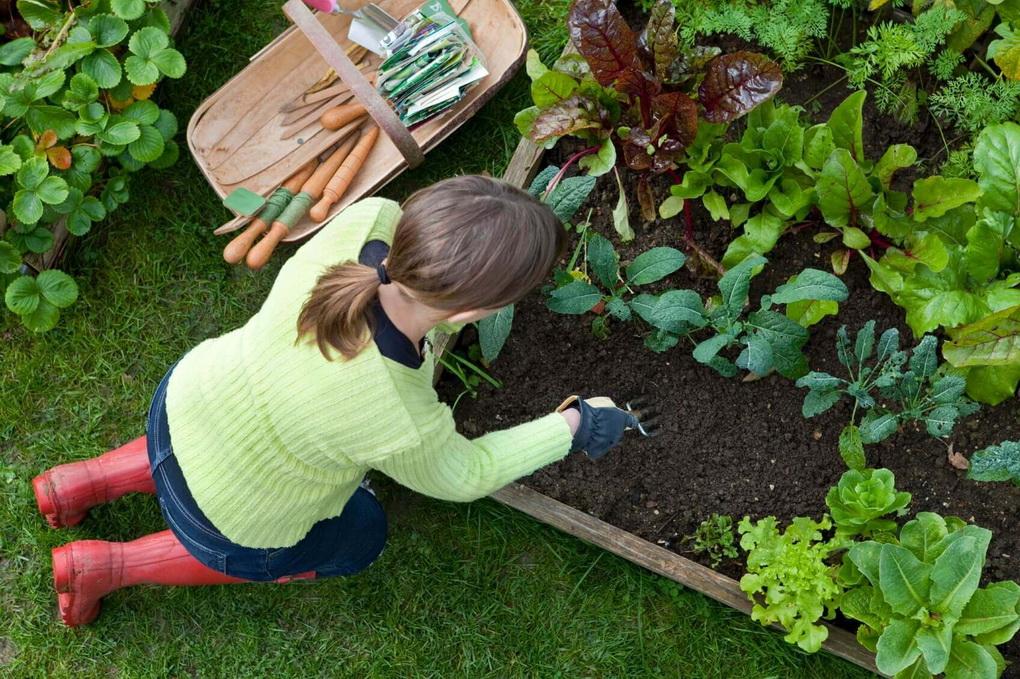 Что и как сажать в саду 282