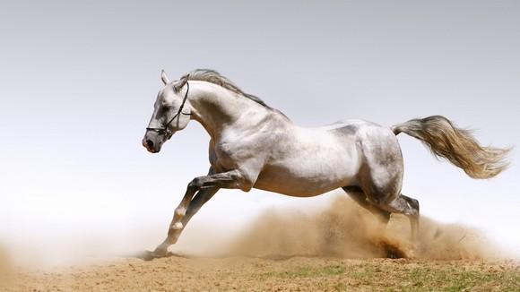 Обязательно обращайте внимание на количество лошадиных сил при покупке мотора