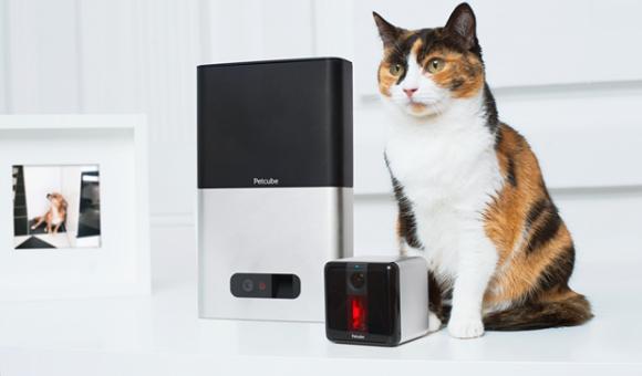 Petcube признали лучшим гаджетом для домашних животных - главное фото