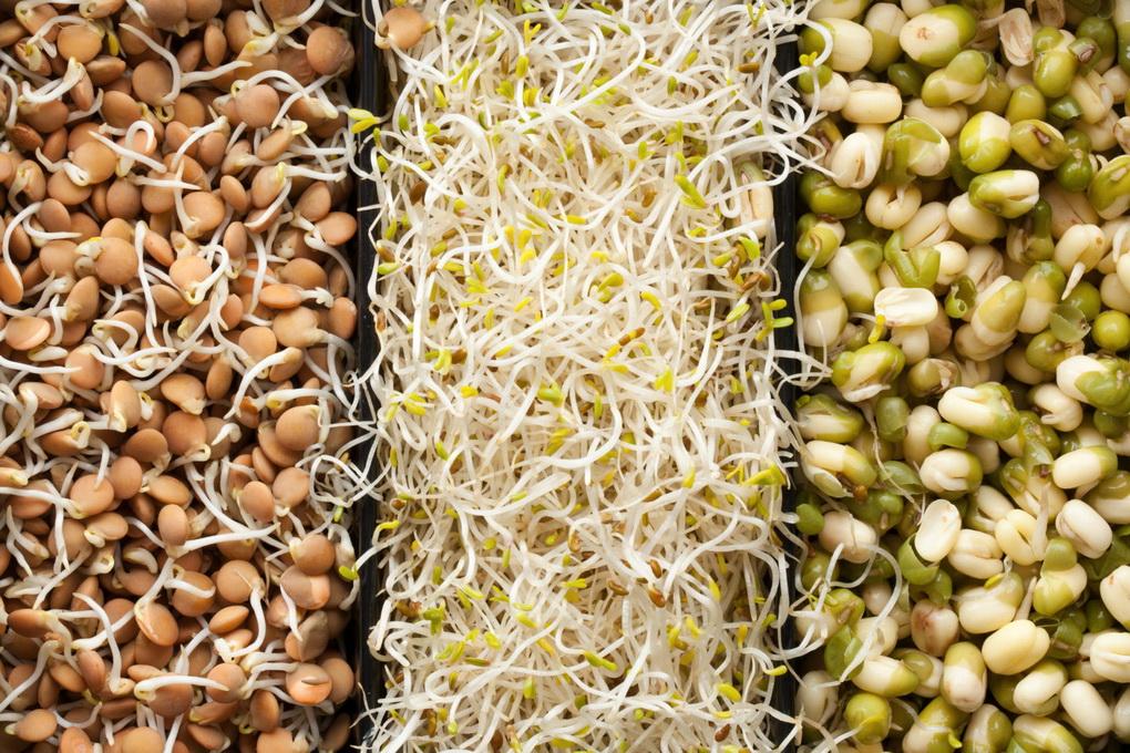 Проращивание зерен