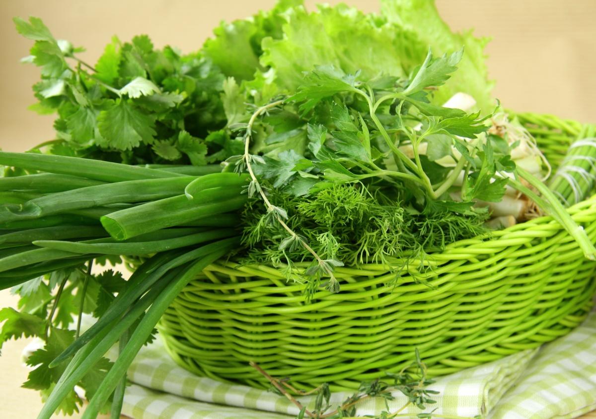 Весенняя свежая зелень