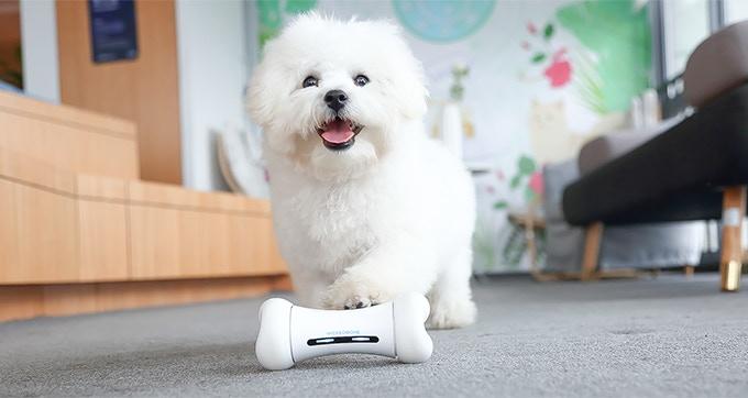 """Стартап недели от АЛЛО: WICKEDBONE - """"умная"""" косточка для собак,  управляемая со смартфона"""