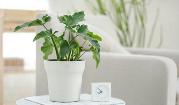 Xiaomi представила «умный» горшок для комнатных растений